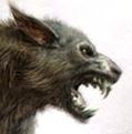 Wolfski