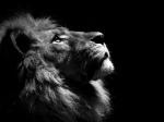 Liontapero