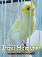 Davi Hemerly