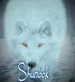 Shunook