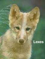 Lexes