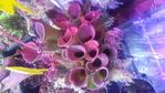Quelques plantes plus rares 238-16