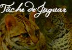 Tâche de Jaguar