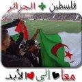 الجزائر قلبي نبضي فلسطين