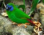 Paradise Aviary