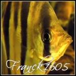 Franck1605
