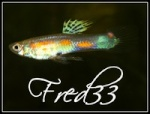 Fred33