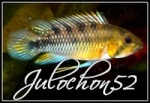 Julochon52