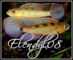 Elendyl08