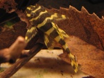 Présentation de vos aquarium 456-50