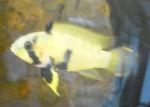 Présentation de vos aquarium 515-86