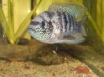 Présentation de vos aquarium 580-79