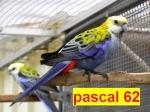 pascal62