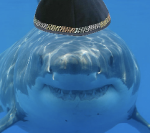 MOSSAD TRAINED SHARK