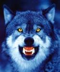 Mr.Wolf