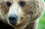 BAREFOOT BEAR