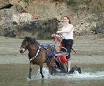 saddlechariot
