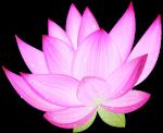 lotus73