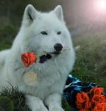 Wolfman10DayAcc