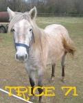 trice71