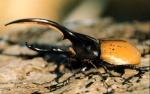 entomo26