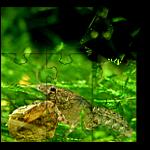 Tigerbit