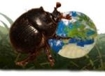 Identificación coleópteros ibéricos 1-33