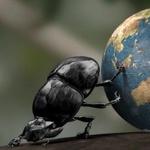 Identificación coleópteros ibéricos 8-1