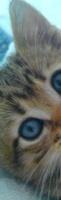 Nuage de Lynx