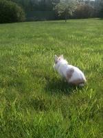 White_Rabbit
