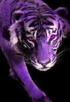 tigreviolet