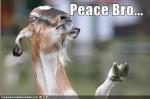 Peacez