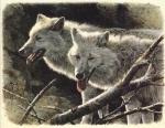 ilse_the_wolf