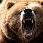 Russian Circus Bear
