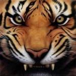 {FB}TigerFang__zz