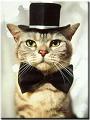 Prof. Meow Meow