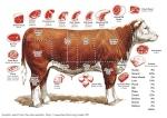 Beef Surprise