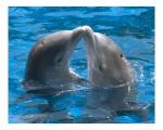 delfino innamorato