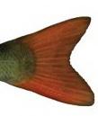 Redfin
