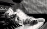 sophiecat