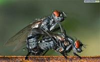 La mouche killeuse du 09