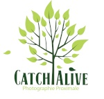 Catch Alive