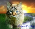 Bramblesky