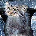 Сумеречный Кот