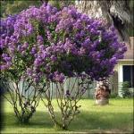 fleurs-et-plantes
