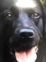 taja-big dog