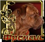 Impera Dog