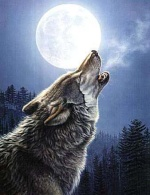 stefwolf69