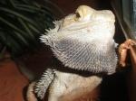 reptile-of-amazone
