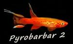 pyrobarbar2